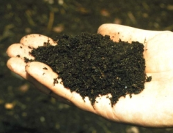 Compost in Persons Hand